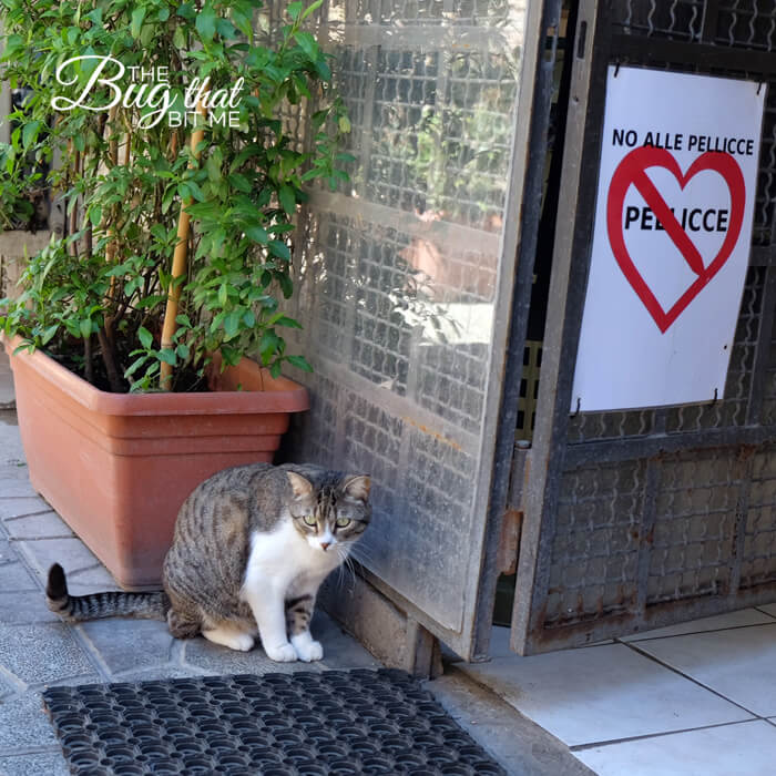 Torre Argentina Cat Sanctuary, Rome | The Bug That Bit Me
